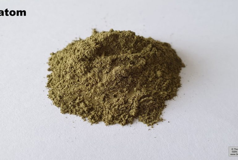 Some Individuals Excel At Greatest Kratom?
